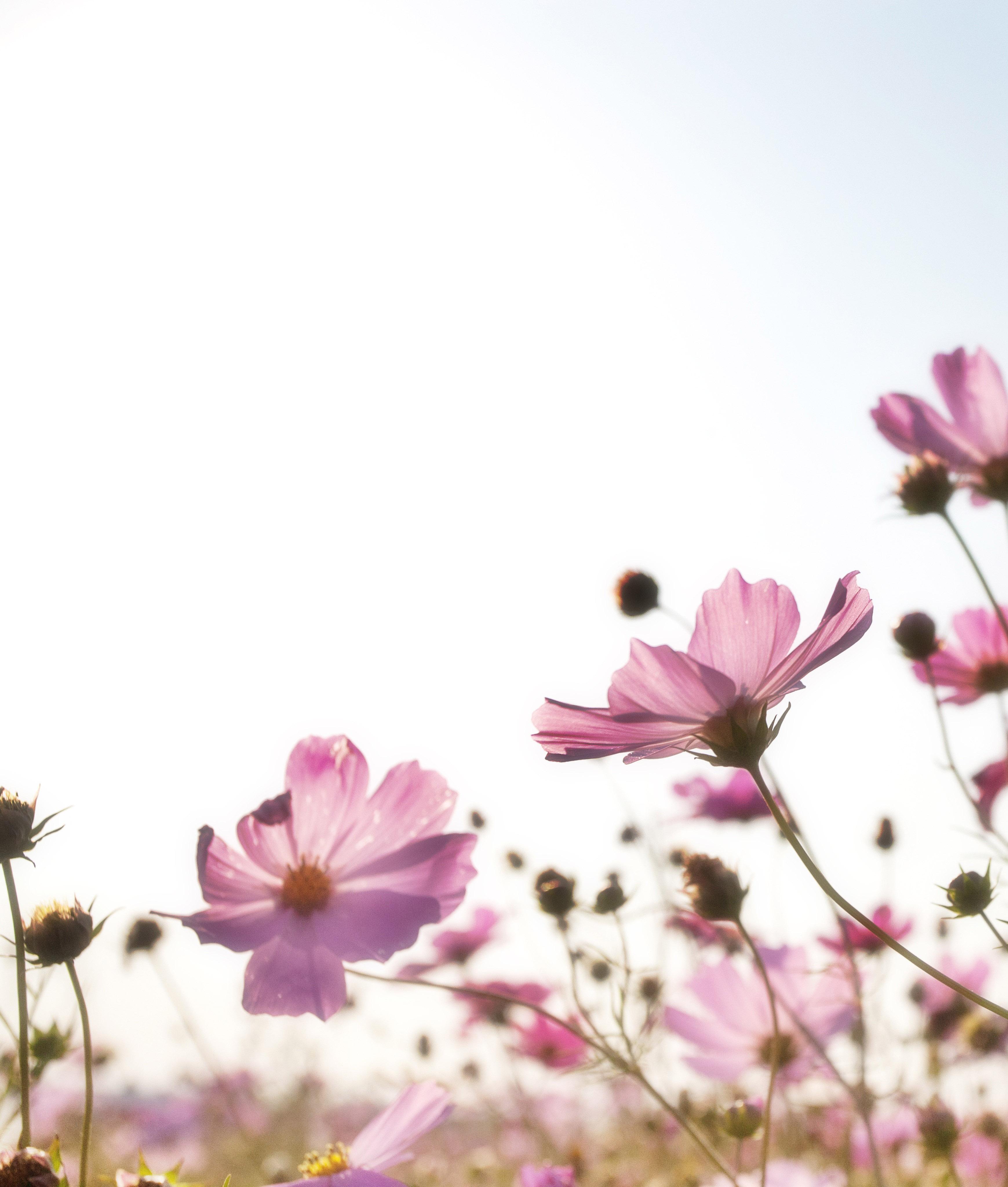 flowers 1476517