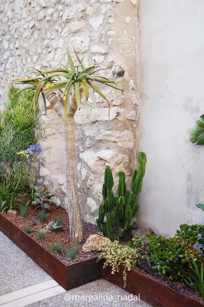 Desértico jungle vibes garden Margalida Nadal