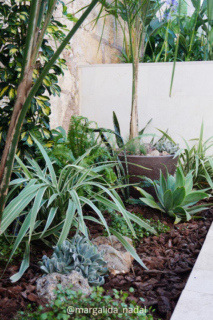 Sucus y palmeras Jungle vibes garden Margalida Nadal