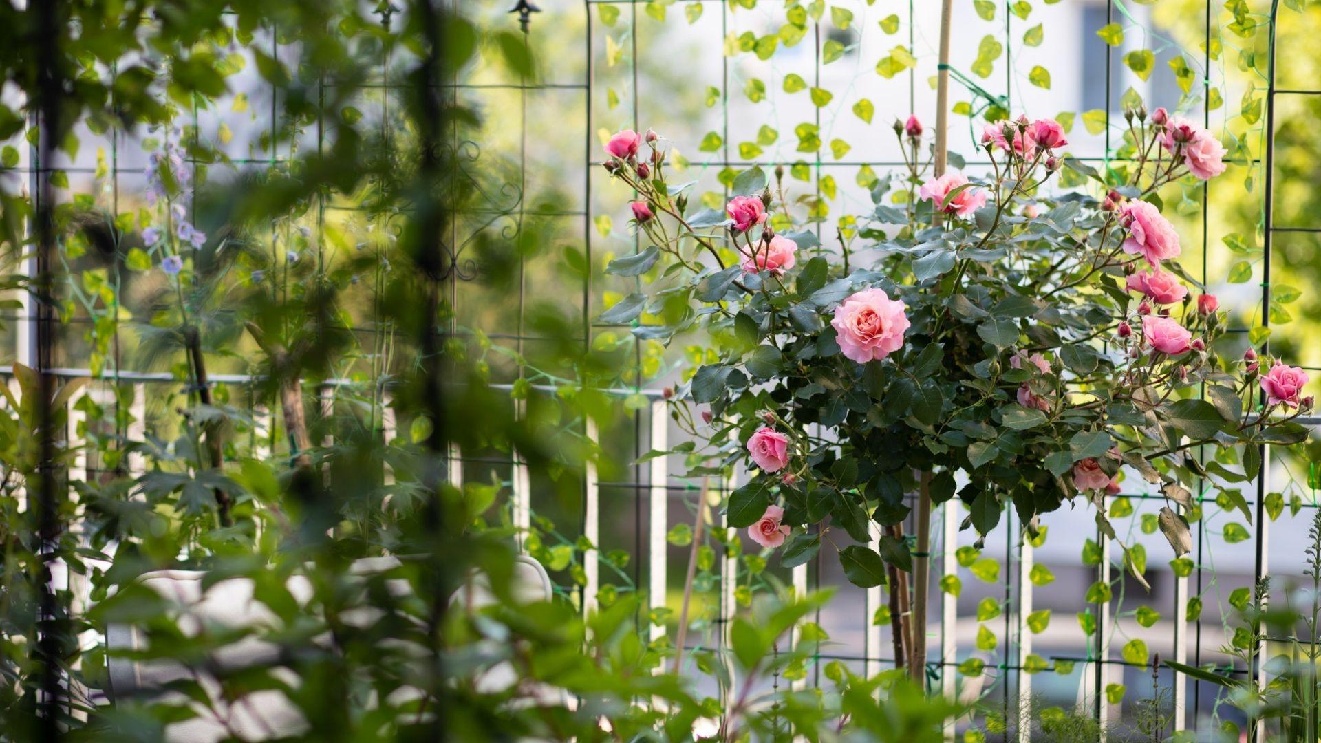 Fotos Collage para portafolios Jardin Ingles en Viena 7